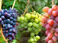 Виноград при диабете: можно ли есть диабетику?